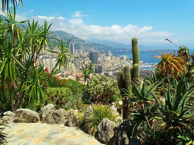 Monaco kaktusz